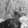 Snow Scene #1