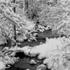 Kingsbrooke Snow