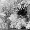 Snow Scene #2