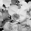 Orchids #6