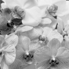 Orchids #7