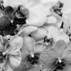 Orchids #8