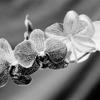Orchids #3