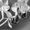 Orchids #4
