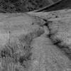 Matthews/Winters Park Trail