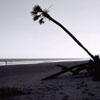 Hunting Island Beach #1