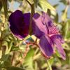 Balboa Park Flower #2